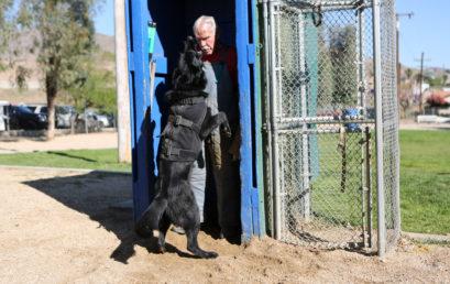 Guard & Bark